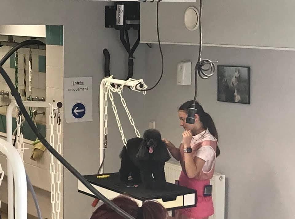 CTM Toiletteur canin et félin